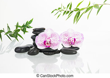 Spa concept with hot stones, orchids and bamboo leaves