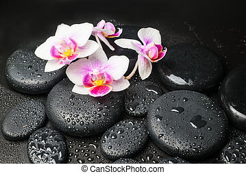 Spa concept with pink with red orchid (mini phalaenopsis) ...