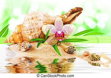 Spa concept with seashell