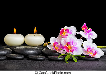 spa decoration of purple orchid phalaenopsis and candles on black zen stones with drops, close up