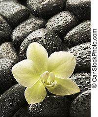 spa, orquídea