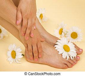 spa., pâquerette, pieds, mains, herbier, fleurs