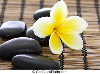 spa, pedras, com, frangipani