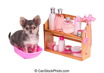 Spa pink glamorous accessories and Chihuahua puppy isolated on white background
