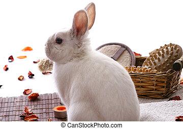 spa, produits, lapin