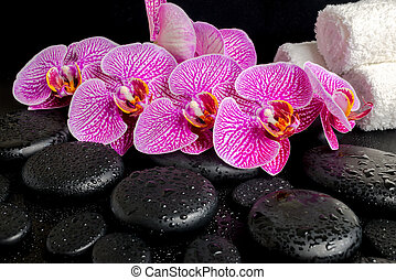 spa setting of blooming twig of stripped violet orchid...