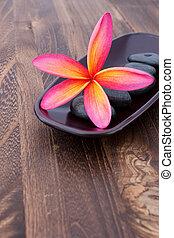 spa, steen, concept, ruimte, houten, wellness, tropische , tekst, plumeria, frangipani, tafel