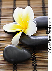 spa, stenen, met, frangipani
