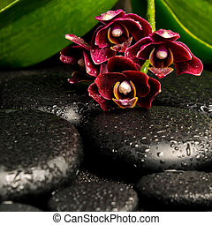 Spa still life of beautiful deep purple orchid flower, phalaenop