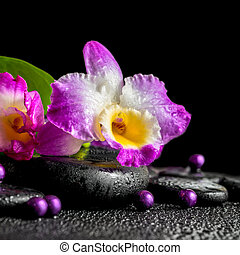 spa still life of purple orchid dendrobium, green leaf Calla lily with dew and pearl beads on black zen stones, closeup