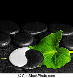 spa still life of Yin-Yang stone texture and green leaf Calla lily with drop on black background with zen stones, close up