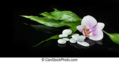 Spa still life with zen stone, orchid flower and bamboo for banner