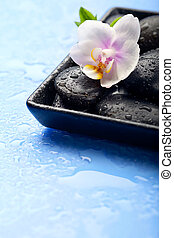 Spa stones and orchid flower on wet blue background