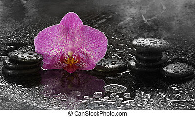 Spa stones and orchid on a dark background with water drops and reflection