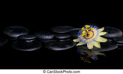 spa, vida, de, passiflora, flor, ligado, zen, pedras, com, reflectio