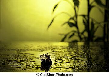 spa, vie, encore, bambou