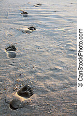 Spaced barefoot tracks