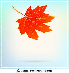 spadanie, klonowy liść, na, abstrakcyjny, białe tło