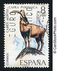 Pyrenean goat