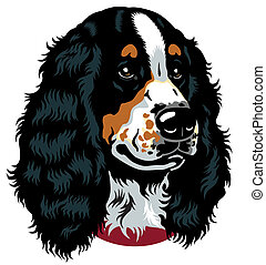 spaniel head - dog head, english cocker spaniel breed, image...