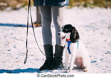 spaniel, hund, sitzt, bei, eigentümer, während, training.