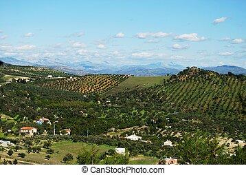 Spanish countryside, Alozaina.