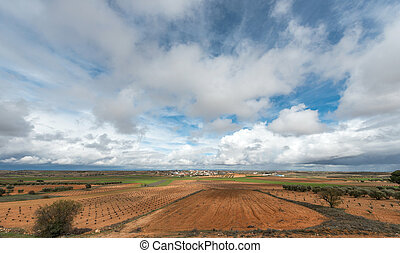 Spanish dry crops, vineyards and olive trees