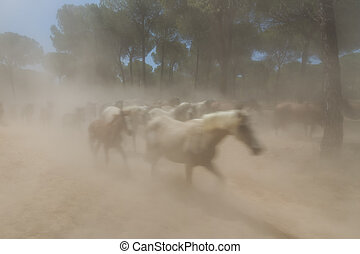Spanish horses in El Rocio the dust mist.