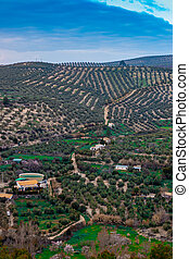 landscape of olive trees with a beautiful relief