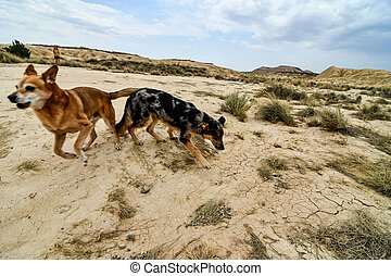 spanish landscape view of european countryside in bardenas reales desert park spain.