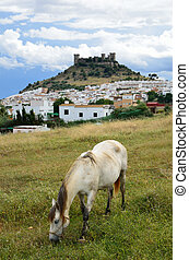 Spanish landscape with a castle and a horse