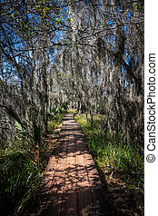 Spanish Moss Covers Board Walk in Jean Lafitte National Forest