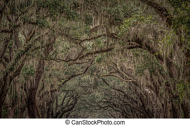 Spanish Moss Growing on Live Oak