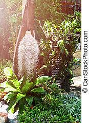 spanish moss hang in the garden