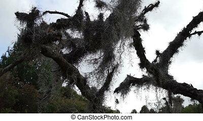 Spanish Moss in Dead Tree Dolly