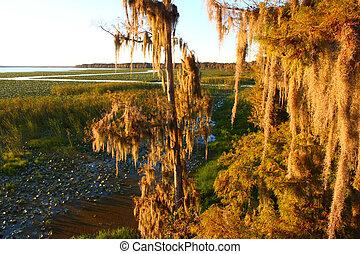 Spanish Moss in Florida