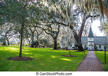 Spanish Moss in Heavenly Light