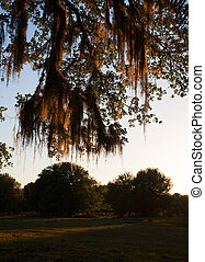 Spanish Moss Sunset