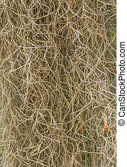 Spanish Moss Texture