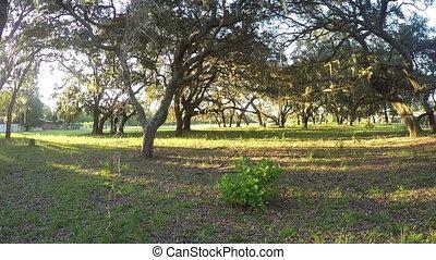 Spanish Moss Trees nature