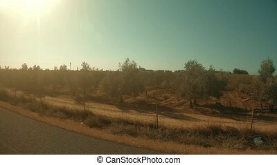 Spanish orchards as seen from moving car - Spanish orchards...