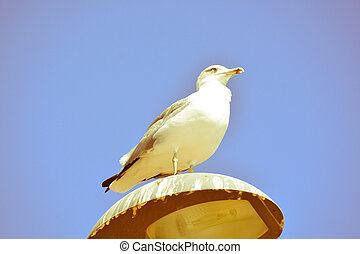 Seagull on a lamp post