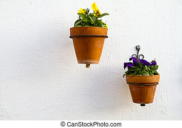 Spanish wall with beautiful plants. Andalucia, white wall