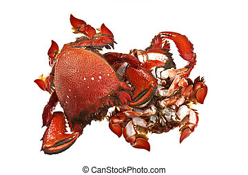 Spanner Crab due to the spanner shaped front claws are also known as Red Frog Crab.