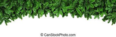 spar, breed, takken, groene, fris, grens, kerstmis