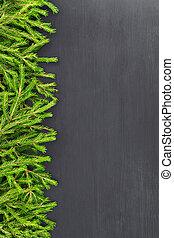 spar, hart, gemaakt, natuurlijke , gevormd, van hout vensterraam, bovenzijde, plat, kerstmis, achtergrond., black , takken, leggen, aanzicht