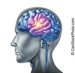 spark of genius brain - Spark of genius symbol represented...