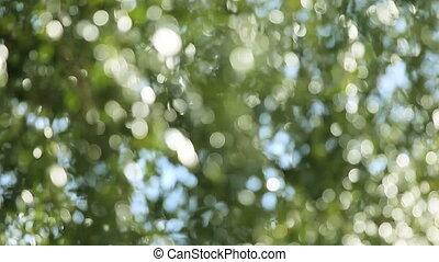 oak tree - sparkling bokeh of a defocused oak tree on a...