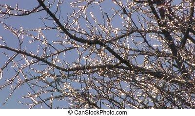 Sparkling frozen twigs on blue sky