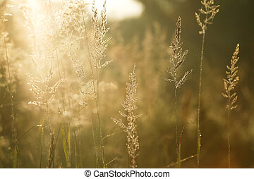 Sparkling morning light - Morning sun shining through the ...